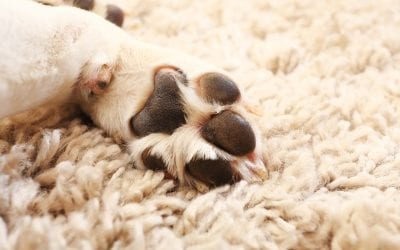 Find the flooring that suits your furry friends