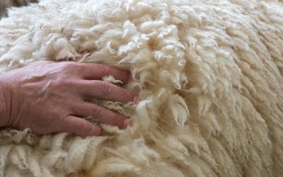 What are the benefits of woollen carpets?